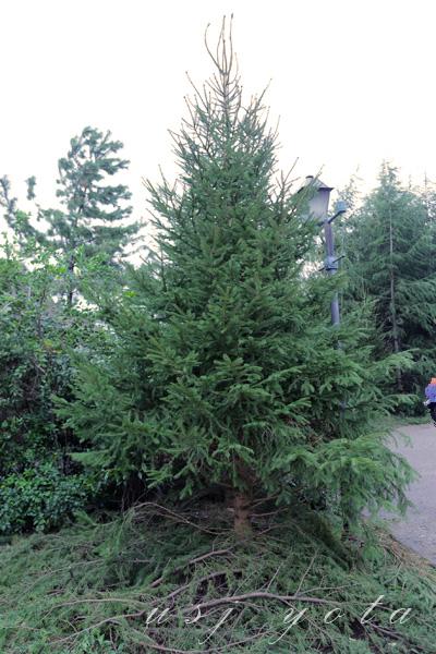 ハリーポッターエリア入り口の木