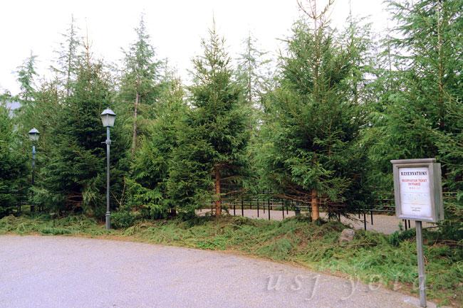 ハリーポッターエリア入り口、植えられたの木