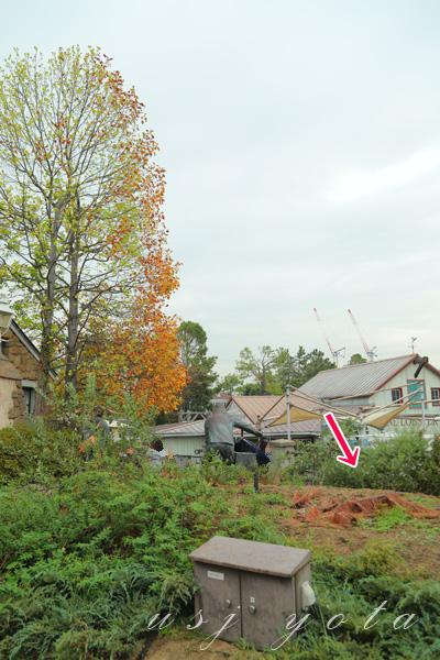 アミティビレッジで伐採された木の後