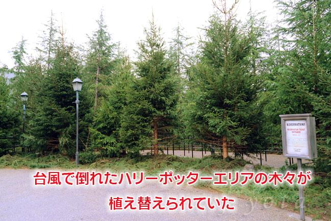 ハリーポッターエリアに植えられた木