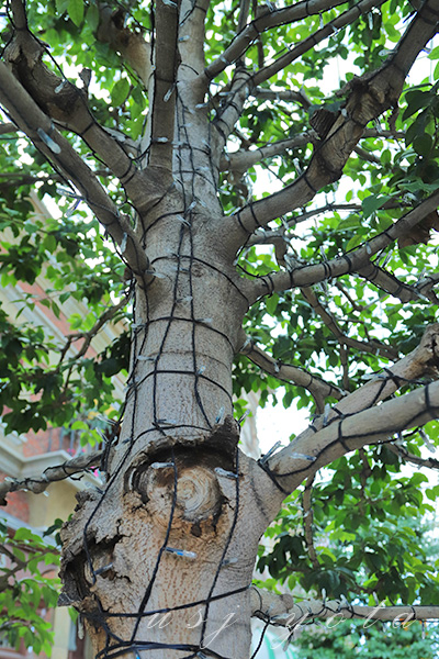 木に取り付けられているイルミネーションに灯りがともります
