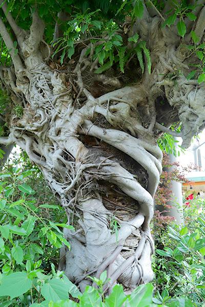 ジュラシックパークの存在感のある木