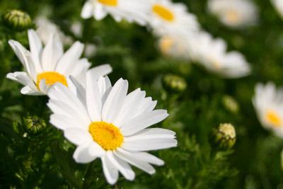USJの花