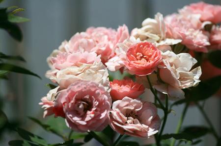 パークの花たち