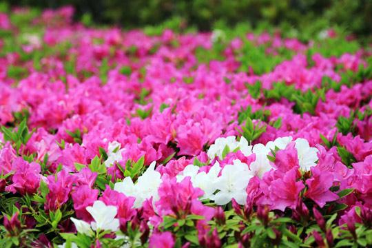 USJの花々