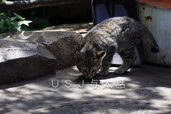 ディズニーで見かけた猫